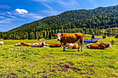 Mountains - Landscape - Chiemgau - Tyrol