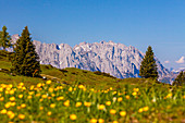 Eggenalm with flower meadow and view of the Wilder Kaiser in summer, Kitzbühel Alps, Tyrol, Austria