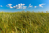 Reed grass and sky on the dunes of the island of Foehr, North Frisia, Germany