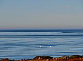 Blick über das ruhige Meer und auf zwei Schwäne, Grimsholmen, Hallandslän, Schweden