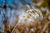 Snow covered grass, Dorum, Lower Saxony, Germany