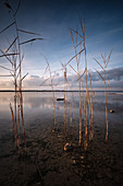 View of Lake Starnberg with reeds in the foreground, Starnberg, Bavaria, Germany, Europe