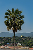 Palm tree in front of Vat Chom Khao Manilat Temple with view over Mekong River to Chiang Khong in Thailand, Houayxay (Huay Xai), Bokeo Province, Laos, Asia