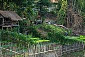Vegetable garden on the banks of the Mekong River, Ban Meung Kai, Luang Prabang Province, Laos, Asia