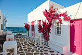 Naoussa, waterfront pink bougainvillea in bloom, Paros, Cyclades Islands, Greek Islands, Greece, Europe