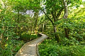 France, Landes, Leon, discovery trail in the Courant d'Huchet National Nature Reserve