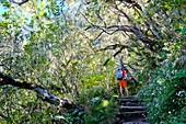 France, Reunion island, Cilaos, hiker in the Grand Matarum forest, Cilaos cirque, listed as World Heritage by UNESCO