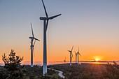 France, Ardeche, Massif du Tanargue, Monts d'Ardeche Regional Natural Park, wind farm, col de La Chavade