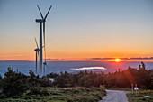 France, Ardeche, Massif du Tanargue, Monts d'Ardeche Regional Natural Park, wind farm, col de La Chavade, lake of Naussac in the background
