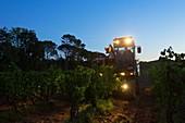 France, Var, Dracenie, Vidauban, grape harvest at Domaine du Chateau d'Astros