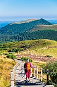 France, Puy-de-Dome, UNESCO World Heritage site, regional nature reserve of Auvergne Volcanoes, panoramic view over the Chaine des Puys from the Goats trail going to the top of Puy de Dome (alt :1465m), Puy de Come and Grand Suchet