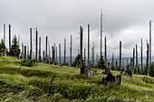 Dead trees in the Bavarian Forest National Park at Großer Rachel, Bavaria, Germany