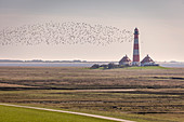 Migratory birds at the Westerheversand lighthouse, North Friesland, Schleswig-Holstein