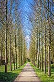 Long avenue in the Hochdorf Garden in Tating, North Friesland, Schleswig-Holstein