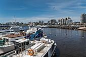 Excursion boats in the marina with the city skyline behind, Punta del Este, Maldonado Department, Uruguay, South America