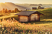 Hut at sunrise on the Seiser Alm in South Tyrol, Italy, Europe;