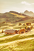 Horse at sunrise on the Alpe di Siusi in South Tyrol, Italy, Europe;