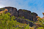 Rock face with eucalyptus trees, Kakadu National Park, Jabiru, Northern Territory, Australia