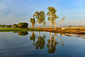 Trees on the riverside in the early morning, Cooinda, Kakadu National Park, Northern Territory, Australia