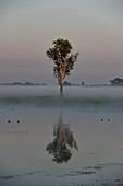 A tree and its reflection in the river in the morning mist, Cooinda, Kakadu National Park, Northern Territory, Australia
