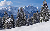 Morning view over the wintry mountain forest to the Wetterstein Mountains, Garmisch-Partenkirchen, Bavaria, Germany, Europe