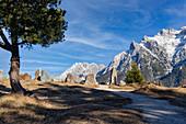 The rock garden above Mittenwald, Upper Bavaria, Bavaria, Germany