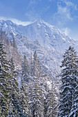 View through the mountain forest up to the wintry summit of the Krottenkopf, Eschenlohe, Bavaria, Germany, Europe