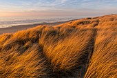 France, Somme, Bay of Somme, Quend Plage, the dune massif that runs along the beach
