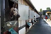 France, Calvados, Pays d'Auge, Deauville, Racecourse of Deauville-La Touques, the stables