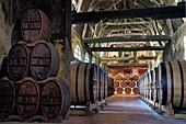France, Calvados, Pays d'Auge, Le Breuil en Auge, Chateau du Breuil producer of Calvados AOC Pays d'Auge, barrels in aging cellars