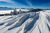 France, Haute Savoie, massive Bauges, above Annecy in border with the Savoy, the Semnoz plateau, exceptional belvedere on the Northern Alps, snow landscape sculpted by the wind and sea of clouds