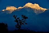 France, Doubs, fruit tree on a cloud background, cumulus at sunset