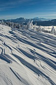 France, Haute Savoie, massive Bauges, above Annecy in border with the Savoie, the Semnoz plateau exceptional belvedere on the Northern Alps, snow landscape sculpted by the wind