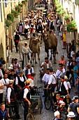 France, Bouches du Rhone, Tarascon, La Tarasque festival (last weekend of June)