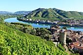 France, Ardeche, Tournon sur Rhone, the virgin tower (nineteenth), vineyard, The Rhone