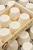 France, Saone et Loire, Hurigny, Chevenet cheese dairy, Maconnais (AOP cheeses made from raw goat's milk)