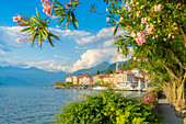 Bellagio and mountains seen from lakefront full of flowering plants, Lake Como, Como province, Lombardy, Italian Lakes, Italy, Europe