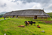 Horses grazing before the Reconstructed long house in the Lofotr Viking Museum, Vestvagoy, Lofoten, Nordland, Norway, Scandinavia, Europe