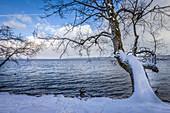 Starnberger See near Bernried, Upper Bavaria, Bavaria, Germany