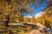 Hiking trail through autumnal larch forest in Ködnitztal, Kals am Großglockner, East Tyrol, Tyrol, Austria