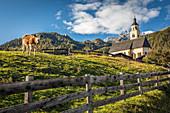 Kuhweide in Obermauern mit Wallfahrtskirche Maria Schnee, Virgental, Osttirol, Tirol, Österreich