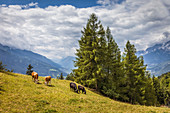 Mountain landscape at the Peace Bell in Mösern in Tirol, Tyrol, Austria