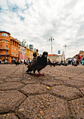 Low angle view of people and pigeons in square in Zagreb city