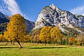 The Große Ahornboden on a golden autumn morning, Karwendel, Großer Ahornboden, Karwendel, Tyrol, Austria