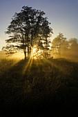 Sunny autumn morning south of Regensburg, Bavaria, Germany
