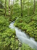 Magic forest near Hintersee, Berchtesgadener Land, Bavaria, Germany