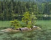small island in Hintersee, Berchtesgadener Land, Bavaria, Germany