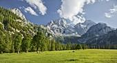 Ahornbäume, Rontalalm, nördliche Karwendelkette, Tirol, Österreich