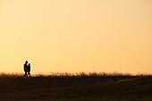 Spaziergänger als Silhouetten im Morgenlicht gehen durch die Salzwiesen beim Mont Saint Michel, Normandie, Frankreich
