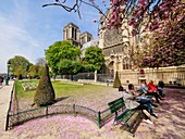 France, Paris (75), World Heritage Site of UNESCO, Notre Dame Cathedral, Paris, April 15, 2019, 3 hours before the terrible fire that will ravage all the frame